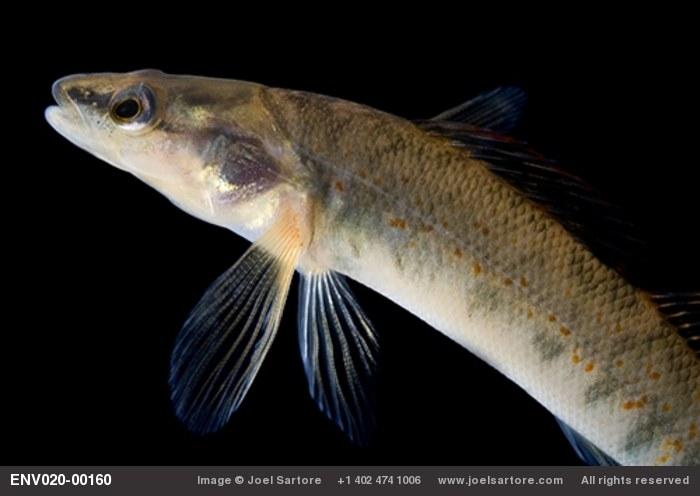 Stock image joel sartore for Fish store lincoln ne