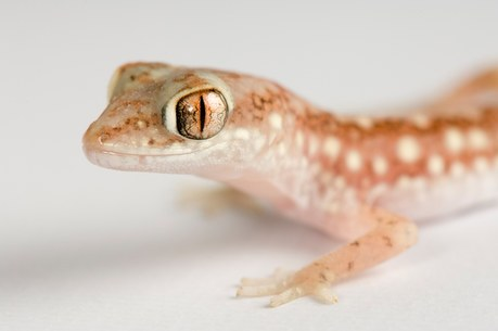 http://images.joelsartore.com/preview/A/ANI017-00242.jpg