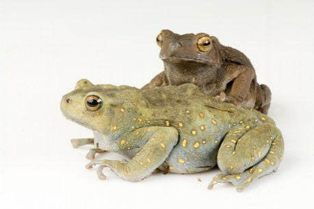 http://images.joelsartore.com/preview/A/ANI025-00218.jpg